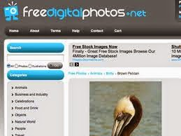 free-digital-photos-free-images-sites-moz.com