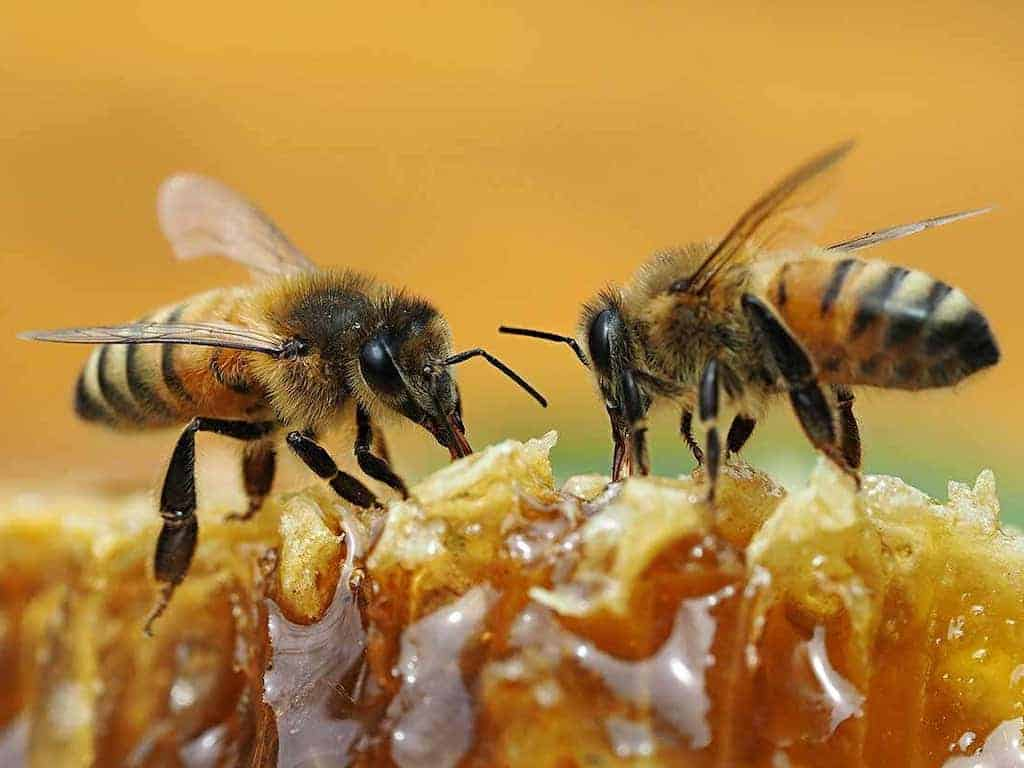 identify real and fake honey