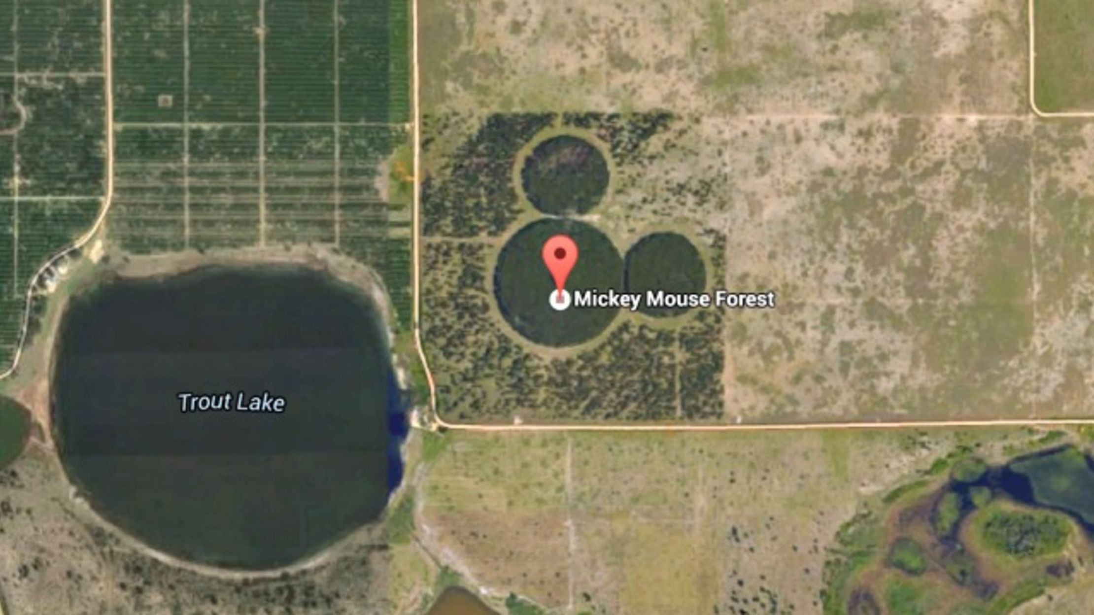 micky-mouse-google-earth